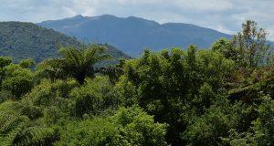 Mataitai Forest